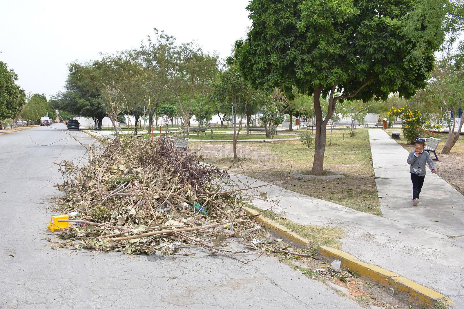 En los alrededores de la plaza de la colonia Villa Florida, es común encontrar ramas apiladas que son retiradas de los propios árboles, pero que se quedan abandonadas a mitad de la carretera. El viento las lleva hasta las casas de la colonia.