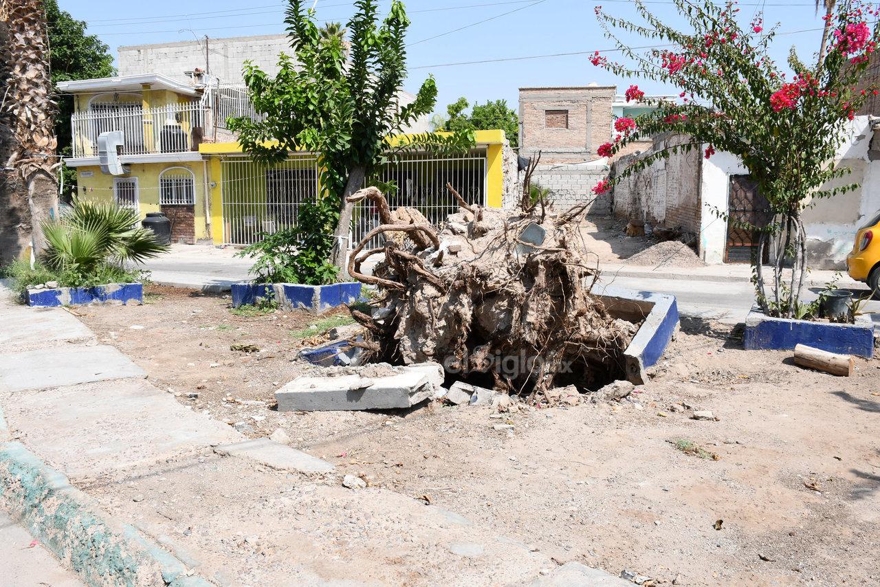 Permanece. Se retiraron algunos árboles viejos para evitar que se presentara algún accidente, pero los troncos o raíces se quedaron en el lugar.