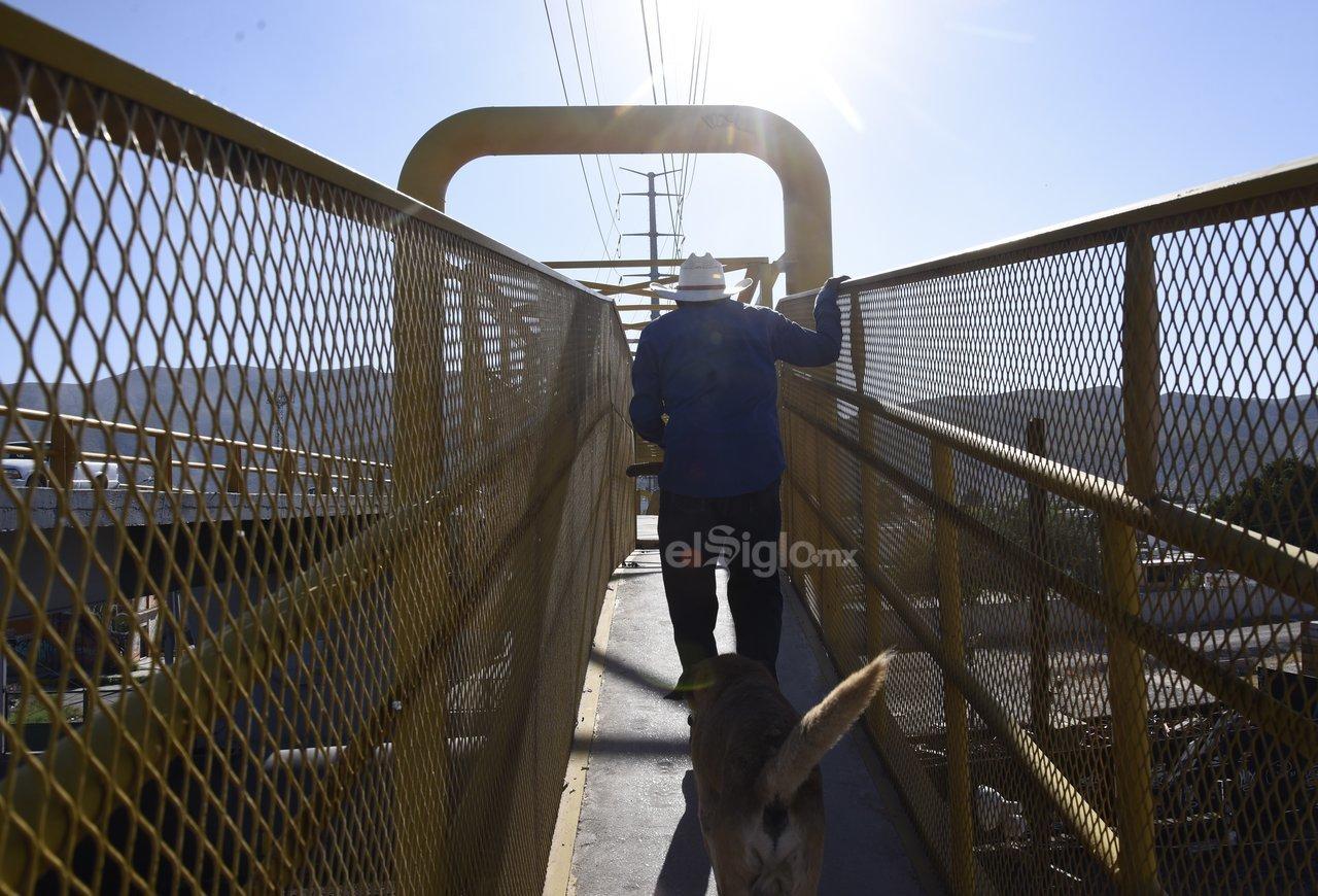Sin condiciones. Al ser utilizado por personas de la tercera edad así como menores de edad, el puente peatonal no es la opción más apropiada debido a que representa un reto físico. Además, los espacios son angostos y no permiten a las personas caminar con libertad.