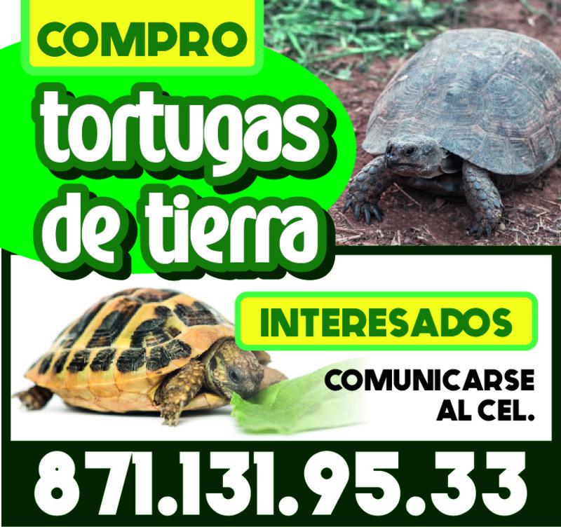 COMPRO TORTUGAS DE TIERRA
