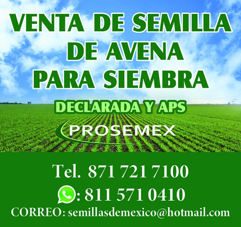 SEMILLA DE AVENA PROSEMEX (ÚLTIMA META)