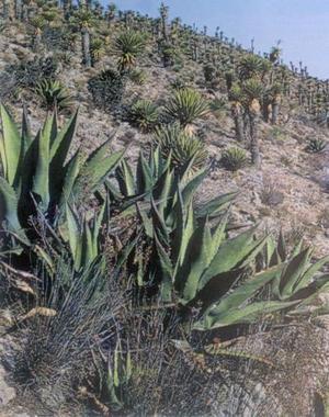 Para los que gustan de observar la naturaleza, pueden ocupar su tiempo en recorrer la llanura para admirar la gran variedad de plantas del semidesierto y en especial las numerosas variedades de cactus que guarda la región, algunas de ellas únicas en el país.