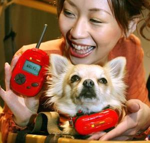 Una modelo muestra el nuevo juguete de la compañía japonesa Takara Co en Tokyo con el cual todo dueño puede saber si su perro está feliz o triste. El juguete traduce las emociones de los perros  al medir la intensidad del sonido que emite por medio de un dispositivo que se cuelga en el cuello de éste y lo transmite a otro dispositivo en manos del dueño.