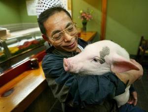 La popularidad de los cerdos bebés como mascotas en Japón se debe, cuentan, a que son muy cariñosos e inteligentes, y que su falta de higiene es sólo un mito.