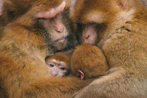 Un lugar caliente ha sido encontrado al fin por estos dos pequeños monos que habitanen el zoológico de Nuremberg Alemania.