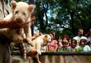 'Estamos contentos, sobre todo por el hecho de que se hayan reproducido de esta forma en cautiverio, ya que el nacimiento de sextillizos es extremadamente raro', dijo Alejandra Durruty, portavoz del zoológico.