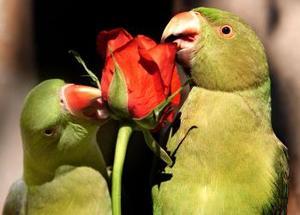 Día del Amor y la Amistad en un zoológico de La India.