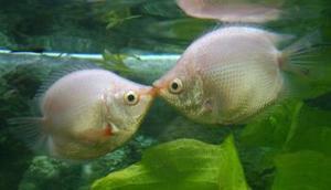 Día del Amor y la Amistad en un acuario de China.