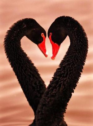 Día del Amor y la Amistad en un zollógico de China.