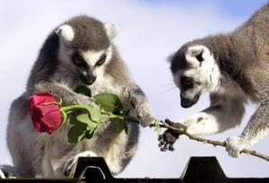 Día del Amor y la Amistad  en un zoológico de Gran Bretaña.