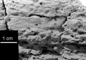 El robot Opportunity descubrió en la superficie de Marte lo que fue un mar de agua salada que podría haber albergado formas de vida, anunciaron científicos del proyecto.