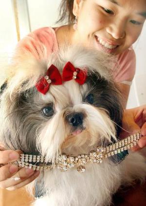 Una mujer tailandesa coloca un collar de cristales que cuesta 61.42 dólares a la perrita Okane, una hembra de la raza shizhu, en un centro comercial para celebrar el día de amor a las mascotas en Bangkok (Tailandia). Las joyas para perros son una nueva moda que se está haciendo muy popular entre los amantes de las mascotas.