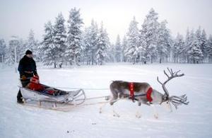 Un habitante de Salla en Finlandia pasea en su trineo guiado por un reno para celebrar la próxima llegada de la Navidad.