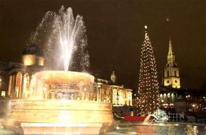 Desde hace medio siglo, cada año los noruegos envían un enorme árbol de Navidad a Inglaterra en agradecimiento por la ayuda recibida durante la Segunda Guerra Mundial. El árbol se instala en la plaza de Trafalgar