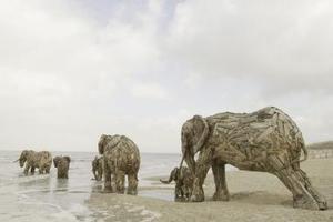 Una manada de elefantes parece caminar por la playa de De Panne, Bélgica.<p> Los elefantes han sido hechos en madera por el artista sudafricano Andries Botha para la trienal de arte Beaufort 2006 en la costa belga.