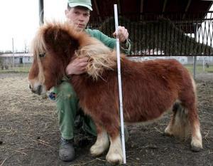 Un hombre posa con el pony más pequeño de Polonia, que vive en el único Zoo-Safari polaco en Swierkocin cerca de Gorzow Wielkopolski, centro de Polonia. <P>  Este pony llamado Riekie mide 60 centímetros de altura y proviene de Holanda.