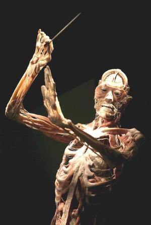 Fotografía de un cuerpo humano disecado, sin piel, que forma parte de una exposición que se ha abierto al público con el fin de educar e infromar sobre las funciones internas del cuerpo humano y el cerebro, en Londres, Reino Unido.