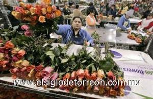 Aunque Colombia no celebra el día de San Valentín, es el segundo exportador mundial de flores por detrás de Holanda y abastece de rosas, claveles y otras variedades a numerosas florerías del extranjero, sobre todo de Estados Unidos y la Unión Europea, donde son muchos los enamorados que compran sus ramos en esta fecha.