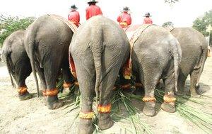 Ambas especies tienen cinco uñas en las patas delanteras, pero en las traseras el elefante africano tiene sólo tres y el asiático cuatro.