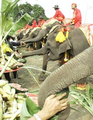 Los elefantes comen en promedio 225 Kg. de vegetal al día y beben hasta 190 litros de agua.