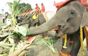Actualmente sólo hay en el mundo dos especies de elefantes, estos se encuentran en la India y en el sureste de Asia y en África hacia el sur de Shara.