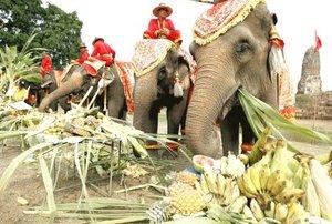 Los conservacionistas aprovecharon el día para pedir más esfuerzo centrado en salvar a las especies y para proteger su hábitat. Los elefantes en Tailandia se encuentran en una situación preocupante, pues ya sólo quedan tres mil en todo el país.