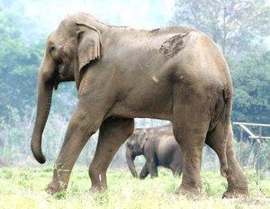 Max, posiblemente el elefante más alto de Tailandia (de 3.35 metros), tiene entre 60 y 70 años, tiene una pata rota y vive en el Parque Natural de los Elefantes, en el valle de Mae Tang (Tailandia). A Max le trajeron al parque en 2002, después de haber sido rescatado de una vida de esclavitud. Sufrío varias palizas y estaba permanentemente encadenado. Mientras pedía limosna con su dueño en la calle, fue arrollado por un camion de 18 ruedas y arrastrado 4.5 metros por el asfalto.
