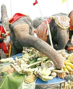 Tailandia celebró el Día Nacional del Elefante con un festejo al que asistieron alrededor de 400 personas, entre ellas varios monjes.