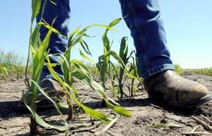 En el estado de Iowa, se han perdido la producción de unos 5 millones de acres de cultivos de maíz y soya, entre otros.
