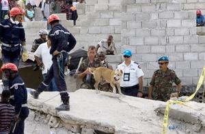 Unos 40 efectivos de búsqueda y rescate de Fairfax, Virginia, se presentaron con perros entrenados.