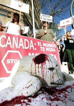 Los manifestantes repartieron  folletos sobre la cacería y entregaron una carta a diplomáticos canadienses exigiendo el cese de esa práctica brutal.