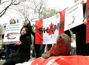 La práctica de matanza masiva de focas fue promovida por las autoridades soviéticas que concedían generosos subsidios a los que aceptaban residir en esta inhóspita región.