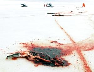 Cada año, a comienzos de la primavera, los cazadores acuden a regiones del norte del país norteamericano para matar a golpes a miles de crías de focas.