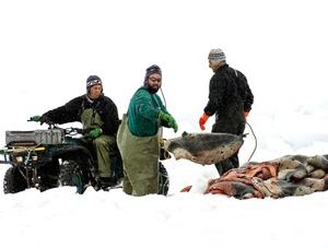 Para 2009, el Gobierno canadiense ha autorizado la caza de 335 mil cachorros de foca, 55 mil más que el año pasado.