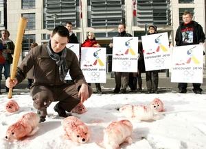 Desde hace 40 años, diversos grupos mantienen campañas públicas para presionar a Canadá para que reduzca y cancele completamente la caza comercial.