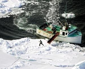 Canadá está bastante decepcionada con los países de la Unión Europea (UE) después de que la comisión de Mercado Interior del Parlamento Europeo (PE) propusiese la prohibición de productos derivados de focas.