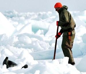 La primera etapa de la caza comercial de focas en Canadá terminó tras la captura de más de 19 mil ejemplares en el Golfo de San Lorenzo.
