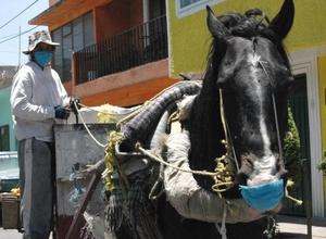 Los caballos se protegen del virus.