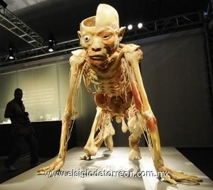 'Bodies, arte más fascinación'