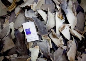 Cargamento de aletas de tiburón de tamaño similar a una cajetilla de cigarrillos en un almacén en Hong Kong (China).