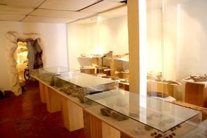 El Museo cuenta con fósiles y piedras de la era de los dinosaurios.