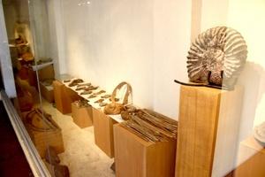 El Museo exhibe moluscos, artrópodos, equinodermos, cordados.