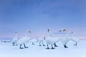 Instantánea realizada por el fotógrafo italiano Stefano Unterthiner para el National Geographic que ha ganado el segundo premio en la categoría de Reportajes de Naturaleza.