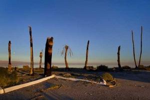 Troncos de palmeras iluminadas por el sol del atardecer a orillas de la playa de Salton Sea (EU).