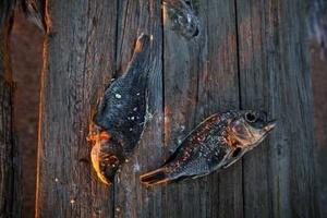 Tilapias muertas en las playas de Salton Sea.