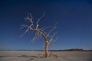 Un roble muerto bajo la luna lluna en una salina de la orilla sur de Salton Sea, cerca de Niland (EU).