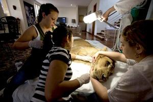 Muchas personas no consiguen entender el gran amor que sentimos por un animal, dijo a Efe Raquel Borges, quien junto a su marido se encarga de los cuidados de catorce animales, entre los que se encuentra Ariel.