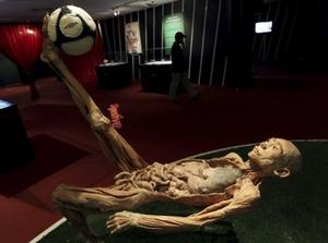 En la muestra se puede observar cientos de órganos (con descripciones de su funcionamiento) y cadáveres practicando deportes, montando a caballo, posando para una foto, etc