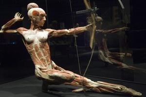 El principal promotor y desarrollador de el proyecto es el anatomista alemán Gunther von Hagens.
