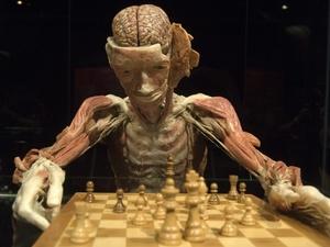 """Los cuerpos """"plastinados"""" serán exhibidos en Basilea."""